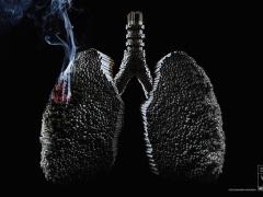 Влияние курения на организм человека Вредные привычки Влияние курения на организм человека